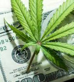 South Ave Cannabis